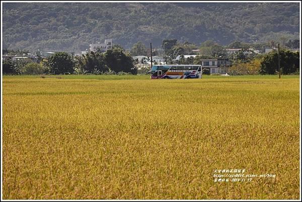 富興社區黃金稻-2019-11-07.jpg