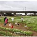 桃園花彩節梅楊場(仙草花海)-2019-11-76.jpg