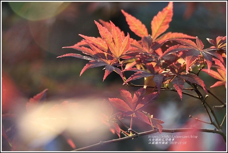 江蘇南京揚州個園-2019-11-69.jpg