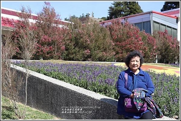 福壽山松紅梅-2019-10-04.jpg