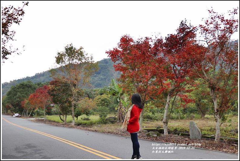 紅葉九鄰楓紅-2019-12-09.jpg