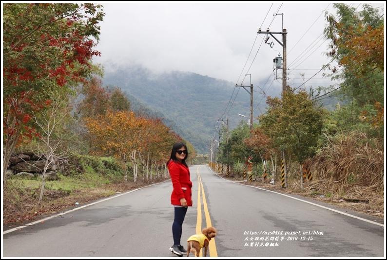紅葉九鄰楓紅-2019-12-19.jpg