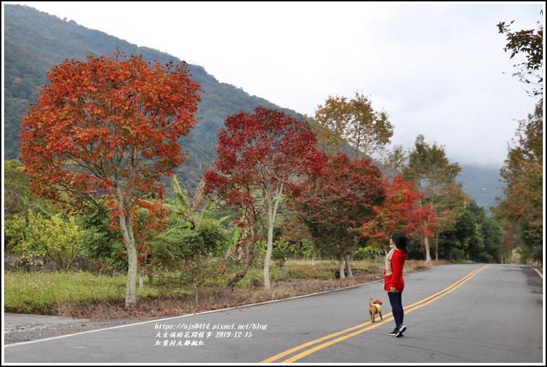 紅葉九鄰楓紅-2019-12-26.jpg