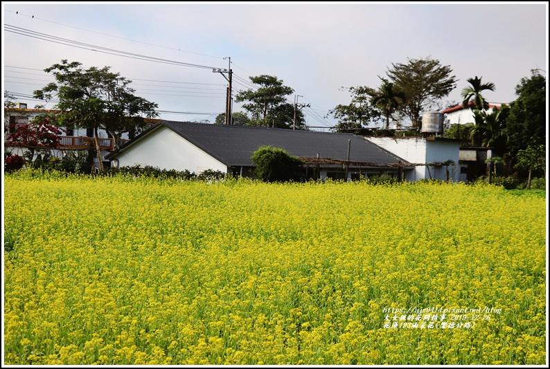 花蓮193油菜花(樂德公路)-2019-12-09.jpg