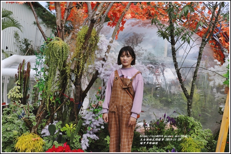 埔里多肉秘境-2019-11-15.jpg