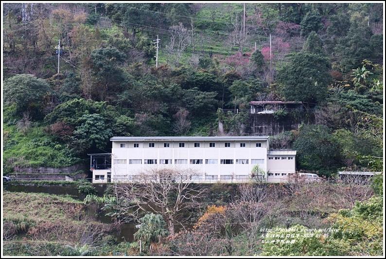 玉山神學院櫻花-2020-01-02.jpg