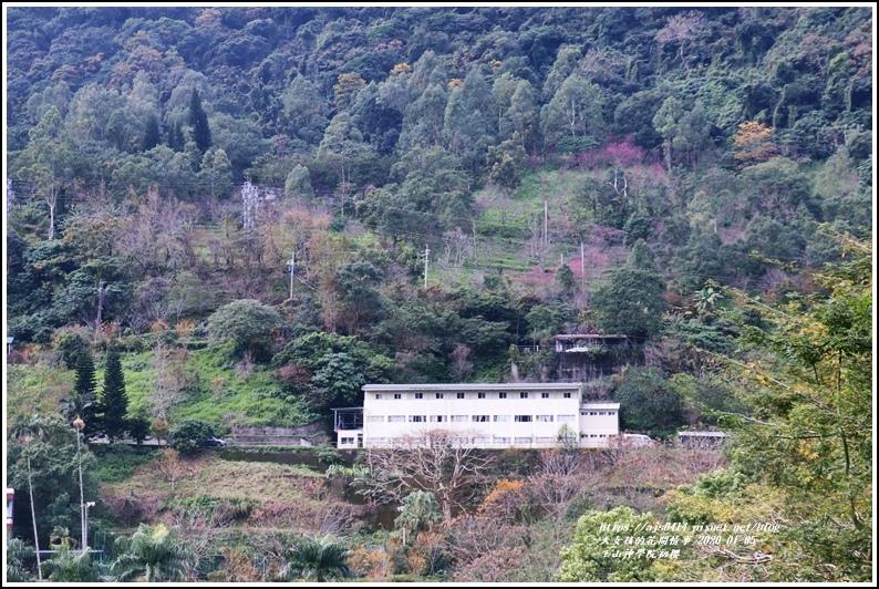 玉山神學院櫻花-2020-01-01.jpg