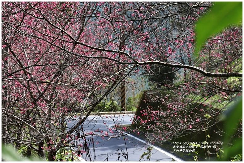 玉山神學院櫻花-2020-01-25.jpg