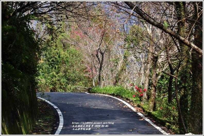 玉山神學院櫻花-2020-01-34.jpg