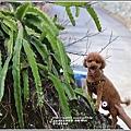 富里羅山瀑布梅園-2020-01-09.jpg