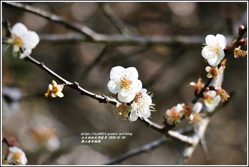 富里羅山瀑布梅園-2020-01-10.jpg