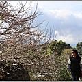 富里羅山瀑布梅園-2020-01-13.jpg