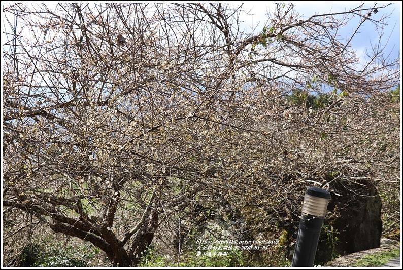 富里羅山瀑布梅園-2020-01-12.jpg