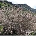 富里羅山瀑布梅園-2020-01-16.jpg