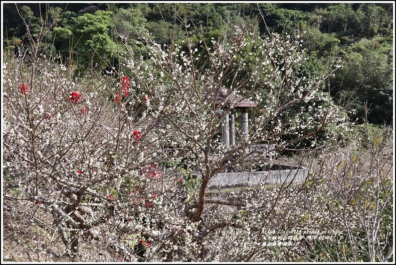 富里羅山瀑布梅園-2020-01-21.jpg