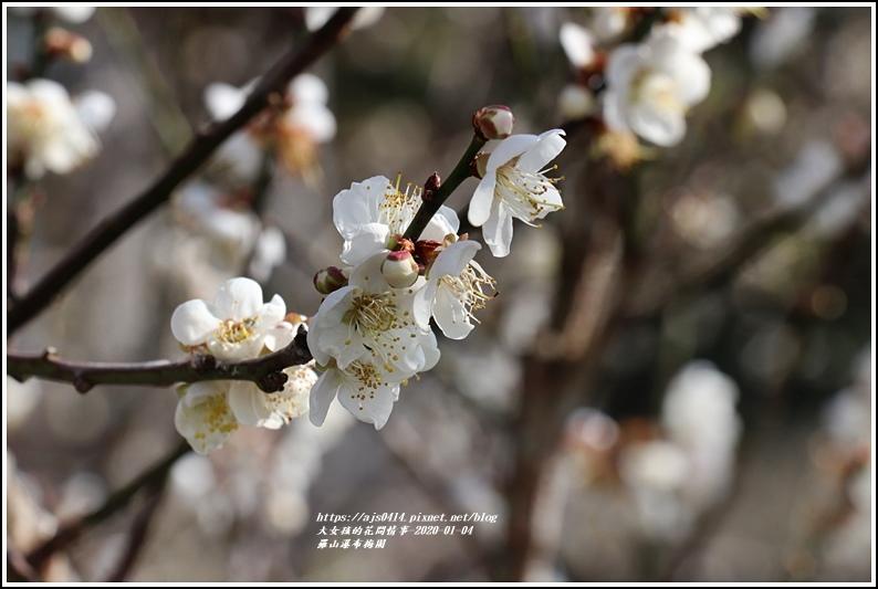 富里羅山瀑布梅園-2020-01-24.jpg