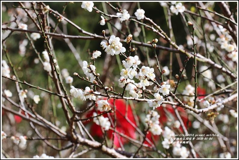 富里羅山瀑布梅園-2020-01-25.jpg