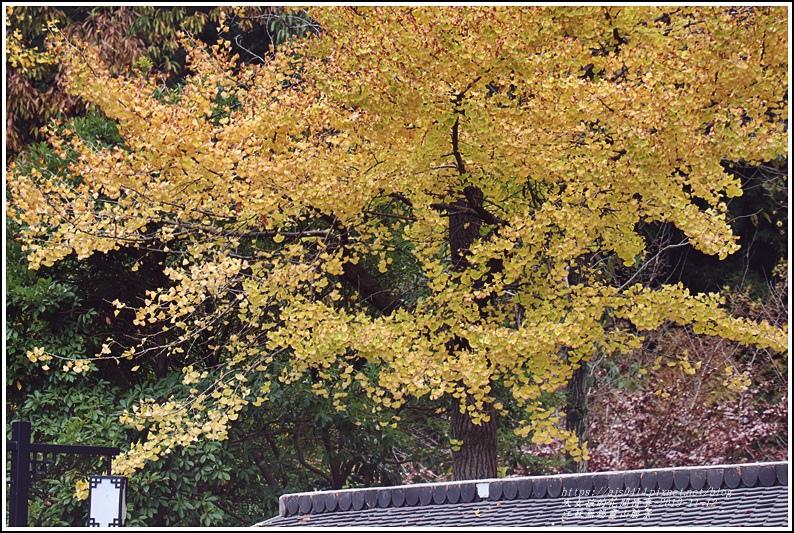 江蘇無錫靈山勝景-2019-11-23.jpg