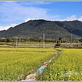 富里油菜花田-2020-01-03.jpg