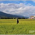 富里油菜花田-2020-01-04.jpg