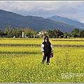 富里油菜花田-2020-01-05.jpg