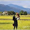 富里油菜花田-2020-01-07.jpg