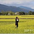 富里油菜花田-2020-01-06.jpg