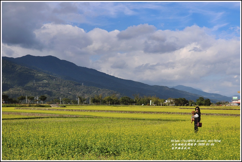 富里油菜花田-2020-01-09.jpg
