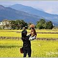 富里油菜花田-2020-01-08.jpg