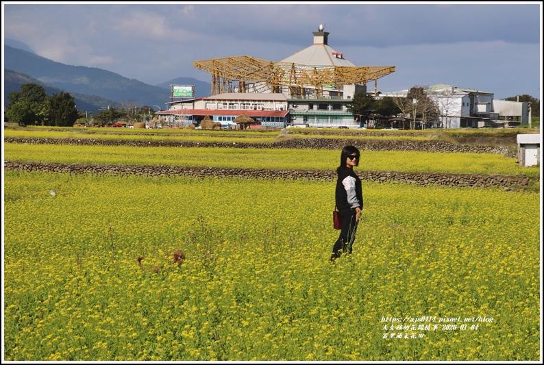 富里油菜花田-2020-01-10.jpg