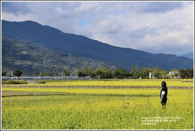 富里油菜花田-2020-01-13.jpg