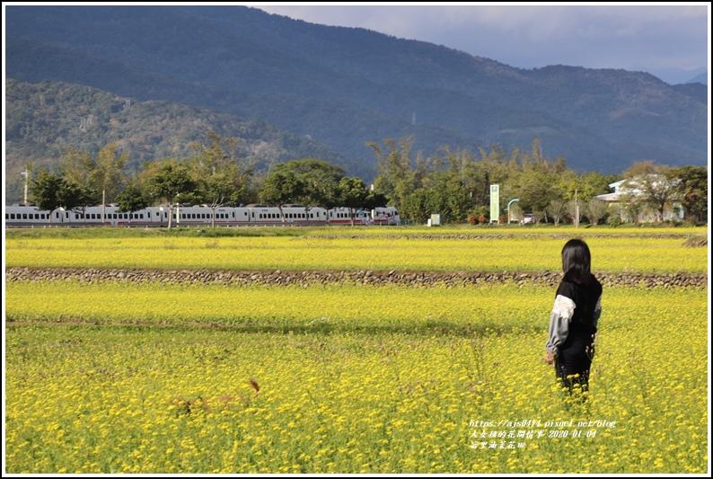 富里油菜花田-2020-01-14.jpg