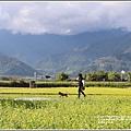 富里油菜花田-2020-01-16.jpg