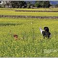 富里油菜花田-2020-01-12.jpg