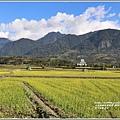 富里油菜花田-2020-01-22.jpg