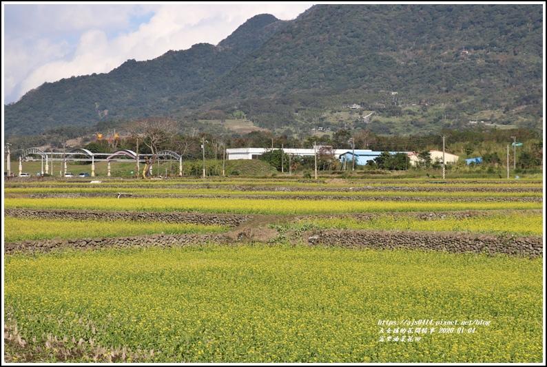 富里油菜花田-2020-01-26.jpg