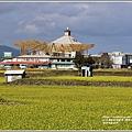 富里油菜花田-2020-01-27.jpg