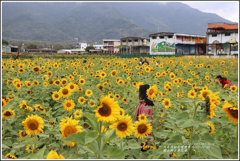 關山(米國學校)向日葵花海-2020-01-07.jpg