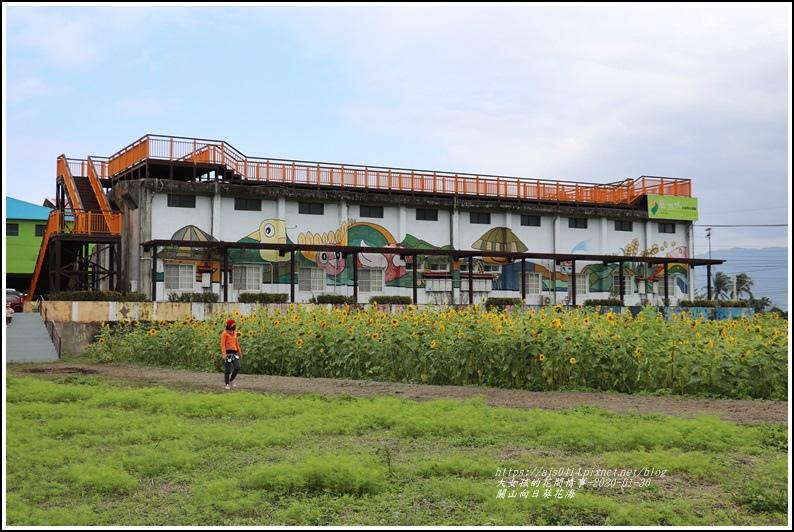 關山(米國學校)向日葵花海-2020-01-10.jpg