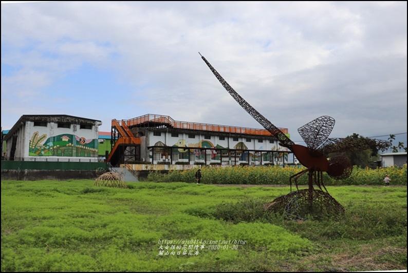 關山(米國學校)向日葵花海-2020-01-13.jpg