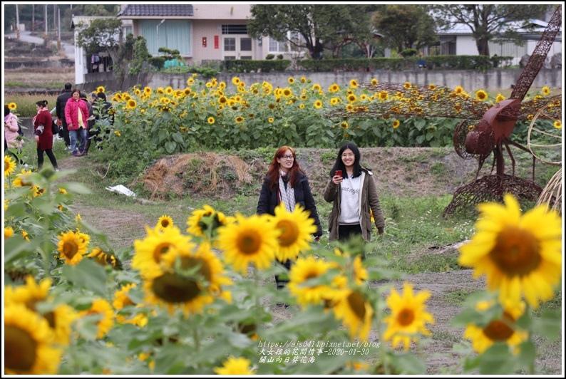 關山(米國學校)向日葵花海-2020-01-30.jpg
