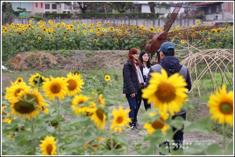 關山(米國學校)向日葵花海-2020-01-31.jpg