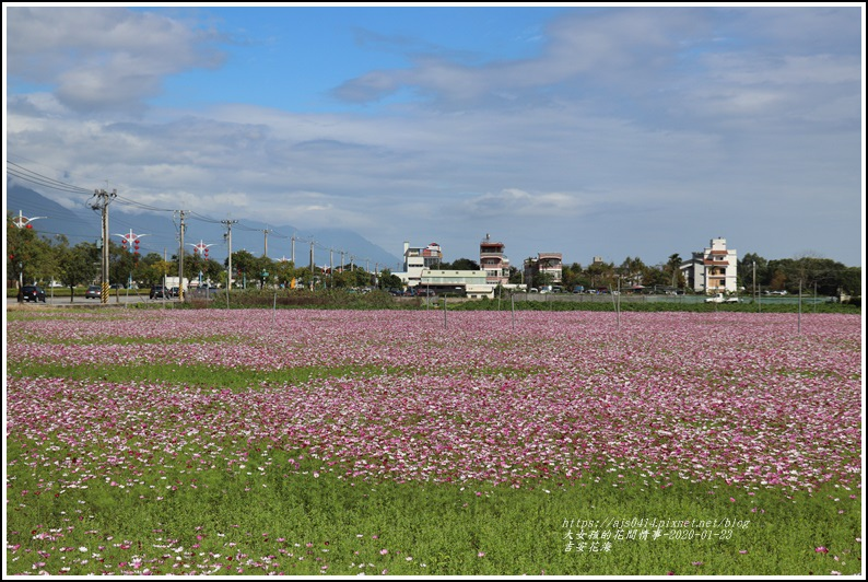 吉安花海-2020-01-09.jpg