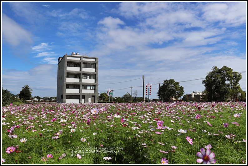 吉安花海-2020-01-01.jpg