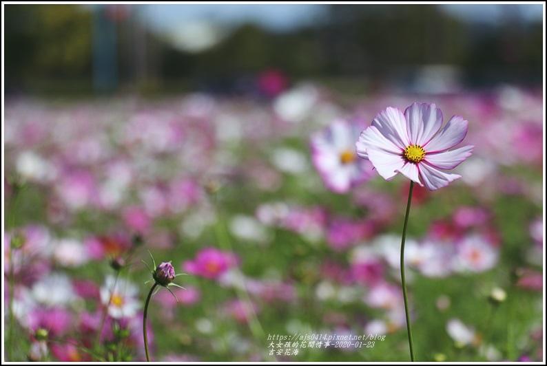 吉安花海-2020-01-05.jpg