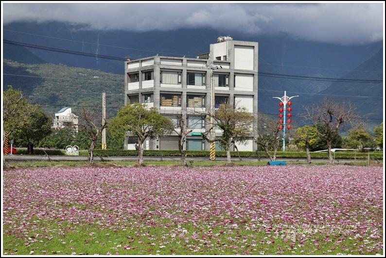 吉安花海-2020-01-18.jpg