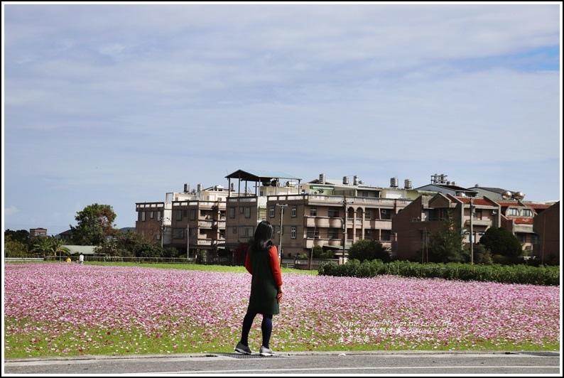吉安花海-2020-01-25.jpg
