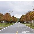 花蓮國福里落羽松-2019-12-09.jpg