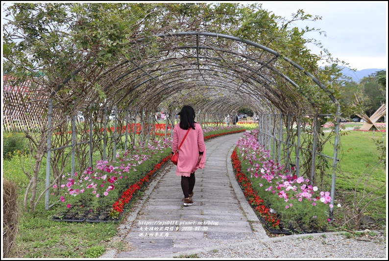池上四季花海-2020-01-07.jpg