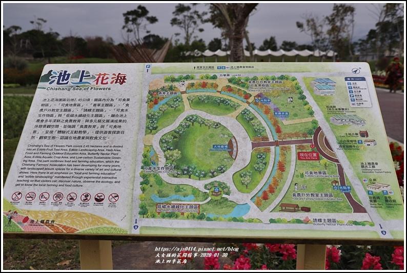 池上四季花海-2020-01-20.jpg